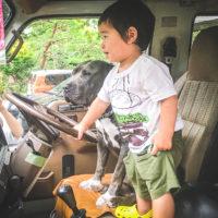 犬と子供が車内にいる様子