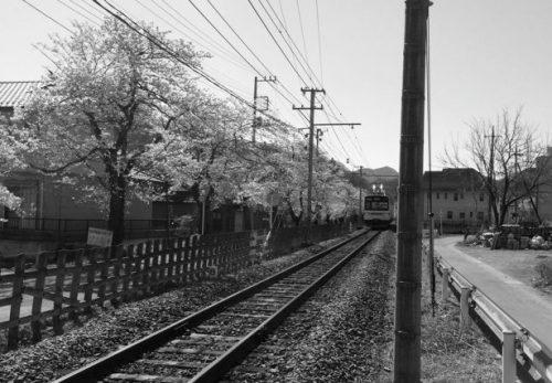 秩父鉄道沿いの桜
