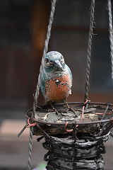 鳥さんイメージ
