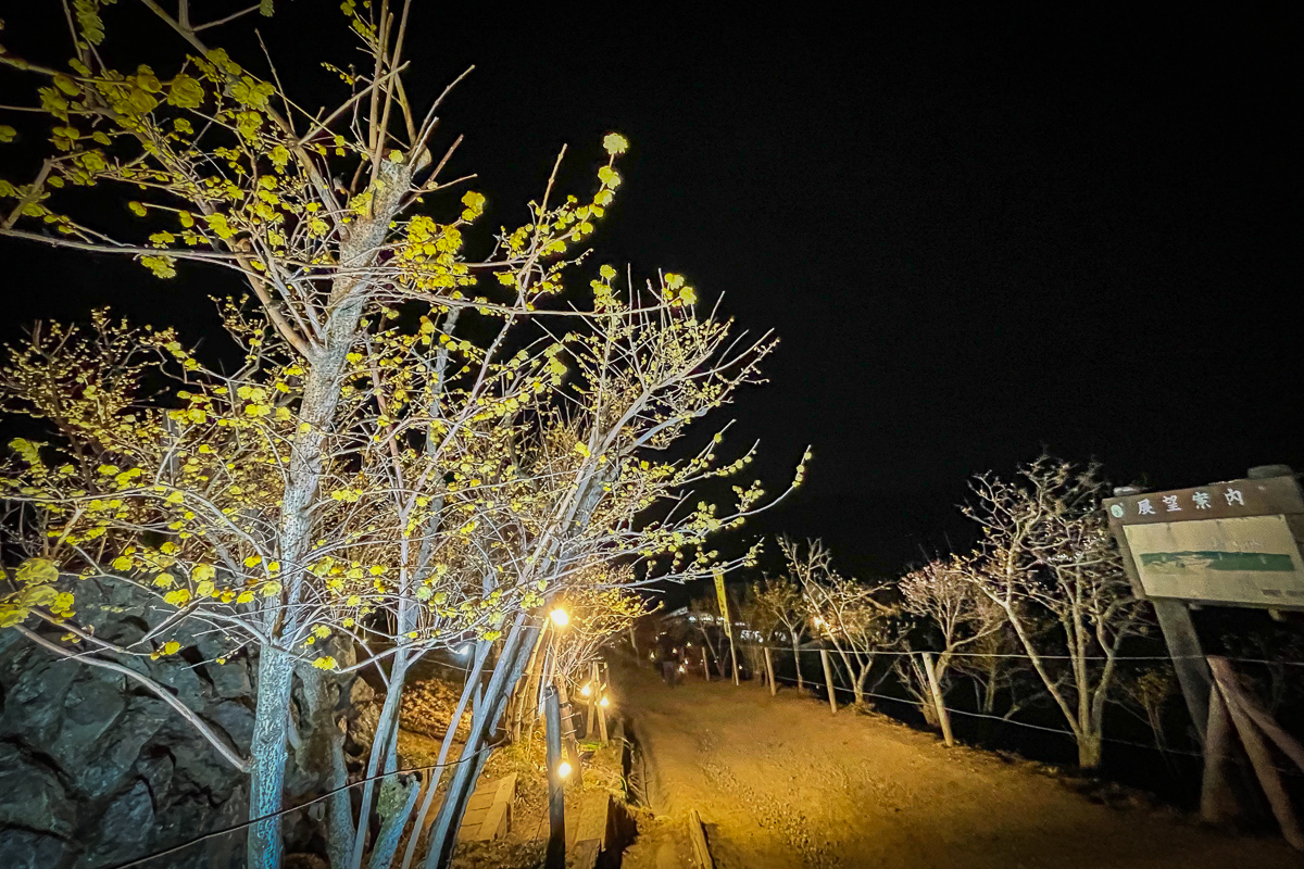 ロウバイ園ライトアップ