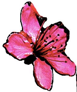 cherryblosome